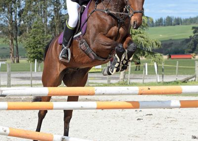 J43: SOLD !!!   Ideal Young Rider / Amateur Jumper