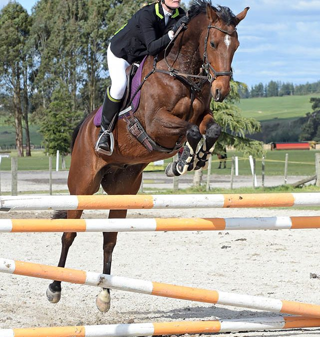J43: Ideal Young Rider / Amateur Jumper