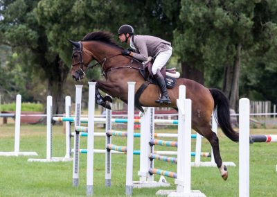 SOLD to AUST !!!      Impressive Eventing Prospect