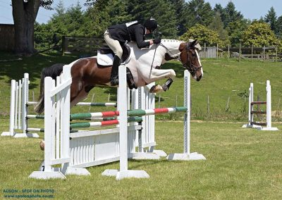 J45: Much Admired Schoolmaster Show Jumper / Eventer