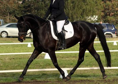 D5: Stunning Young Talented Mare