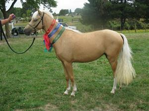P9: Stunning Young Riding Pony