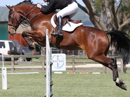 J19: Perfect Junior / Young Rider Show Jumper!