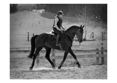 D2: Very Well Bred Dressage Prospect