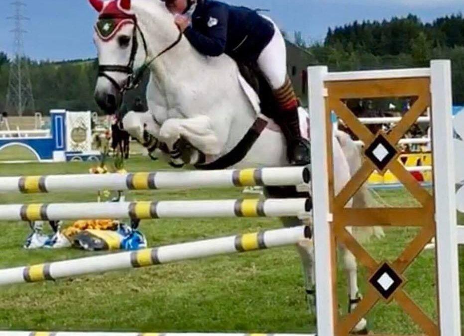 P13: Special Safe Schoolmaster Pony