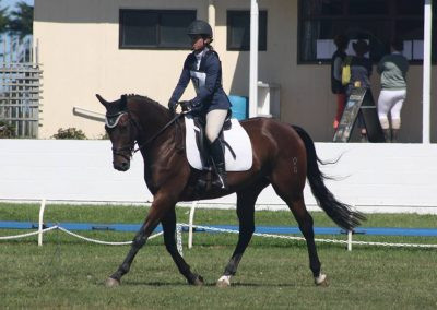 D6: Beautiful Young Dressage Prospect