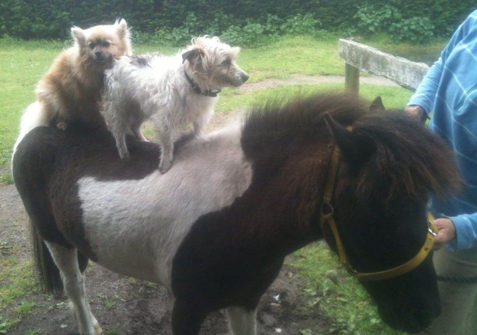 P3: Special Paint Pony