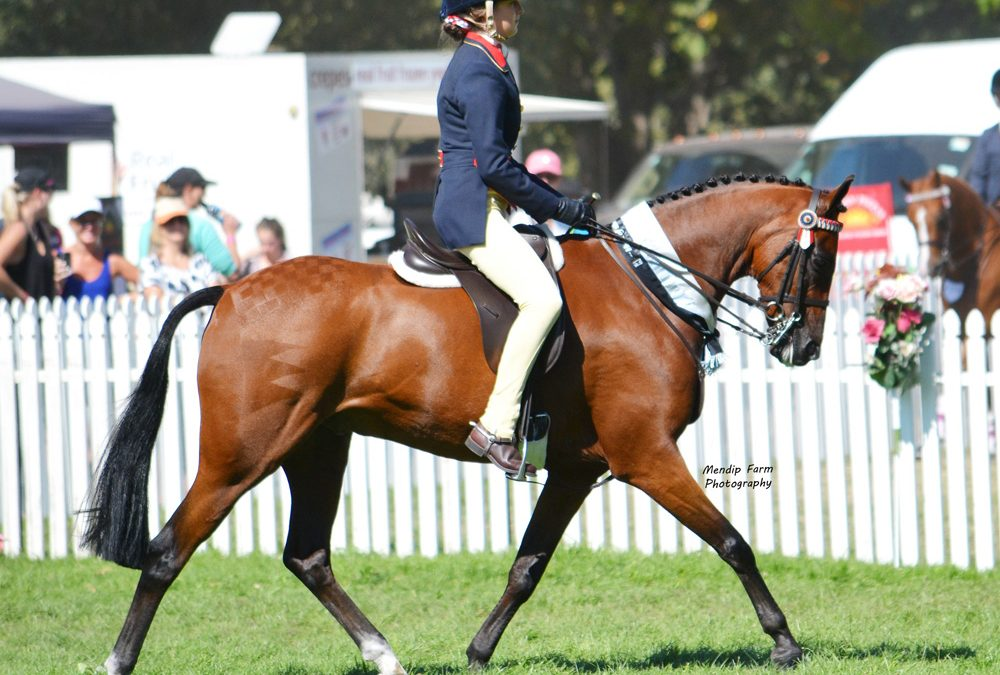 P1: Fancy Experienced Childs Show Pony
