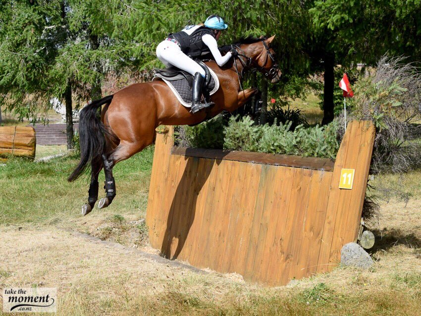 SOLD to AUST !!!      Ultimate Junior 1* Eventer !!!