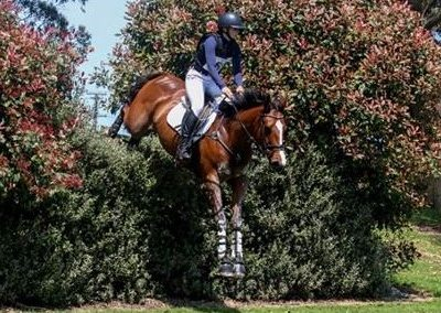 SOLD in NZ !!!                Genuine Schoolmistress 2* Eventer