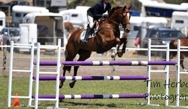 SOLD !!!     ULTIMATE JUNIOR'S 2* EVENTER (in AUSTRALIA)