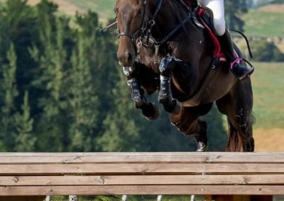E 484 : SUPER EXPERIENCED 2*/3* EVENTER